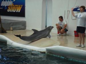 Дельфин в дельфинарии Варна