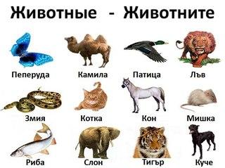 болгарский язык разговорник