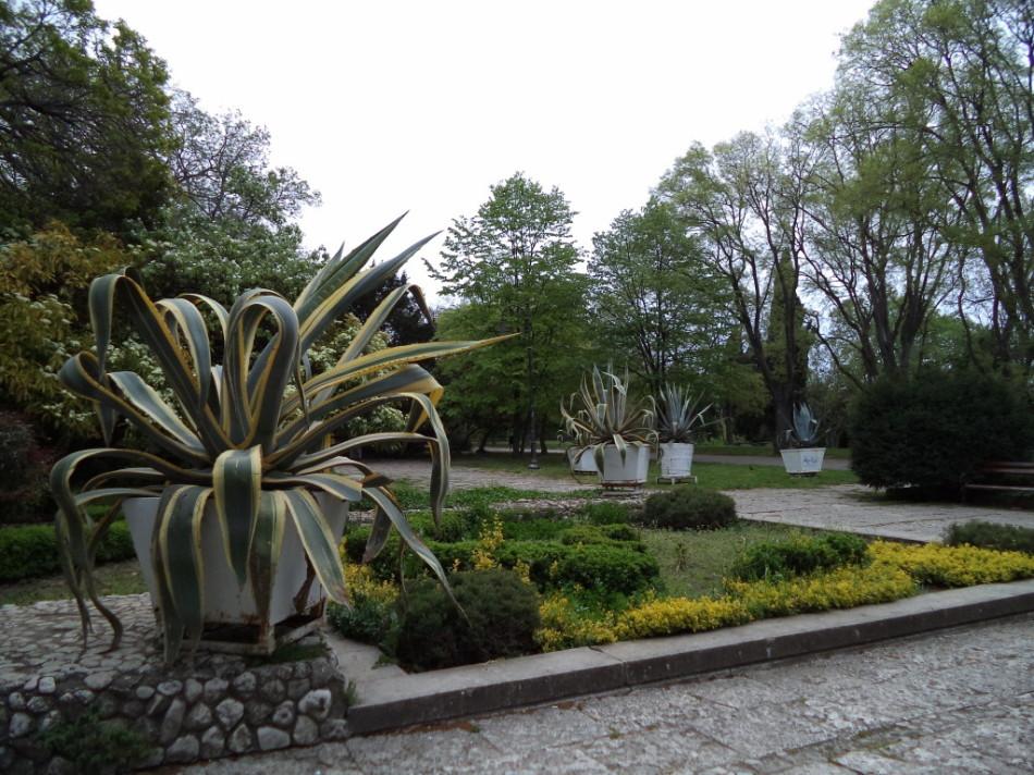 Пальмы которые растут в Приморском парке Варна фото