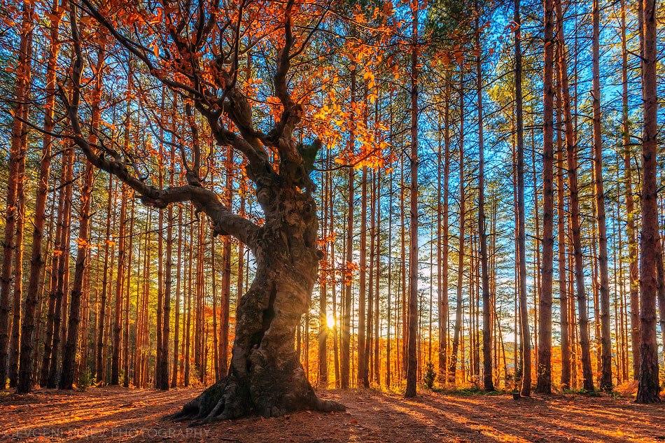 30 феноменальных фотографий - белинташ