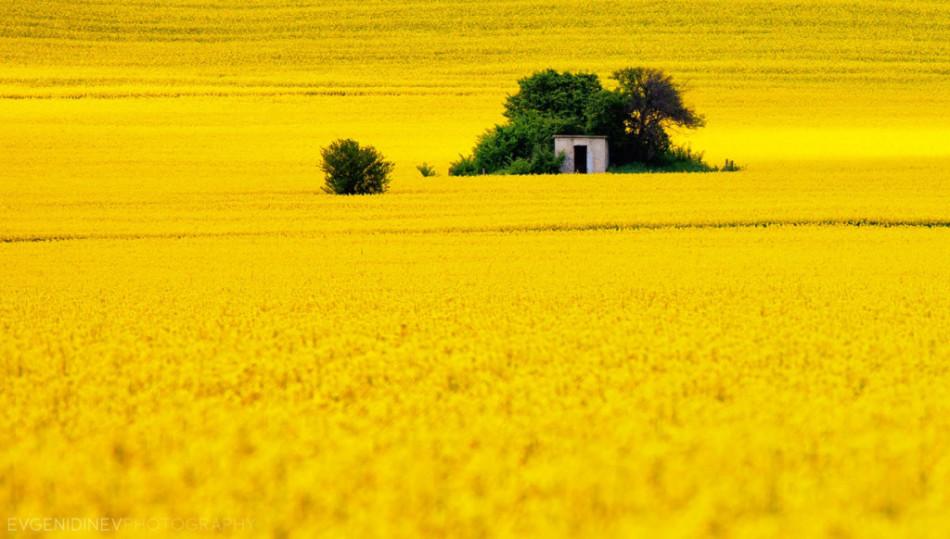 30 феноменальных фотографий - весна и рапсовые поля