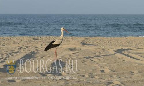 И в этом курортном сезоне - много пляжей на взморье останутся без хозяев