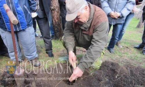 В Айтосе высадили около 1000 деревьев