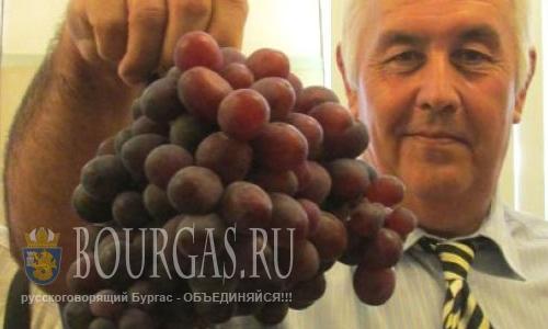 Новые сорта винограда представлены на конференции в Плевне