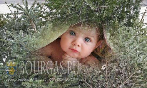 Болгария новости - Купи елку, помоги ребенку