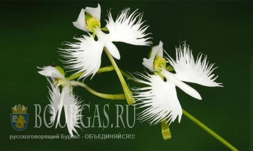 Варна общество любителей орхидей