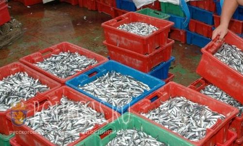 Вредных веществ в черноморской рыбе минимум