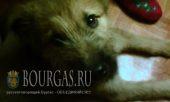 Бездомных собак в Болгарии хватает