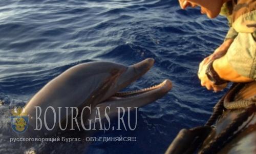 Дельфины съедаю рыбу у болгарских берегов