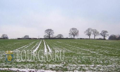 Урожай зерновых в Бургасском регионе под угрозой