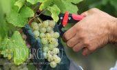 В Болгарии спрос на профессию винградаря