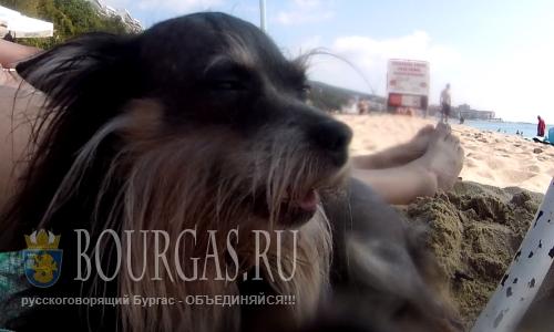 В Бургасе Болгария создадут пляж для собак
