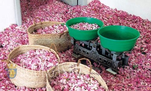 Болгарское розовое масло - всё на экспорт