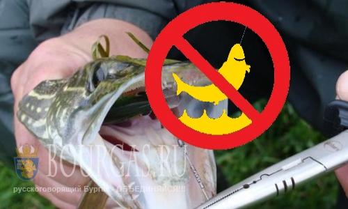 Лов щуки в реках и озерах Болгарии запрещен