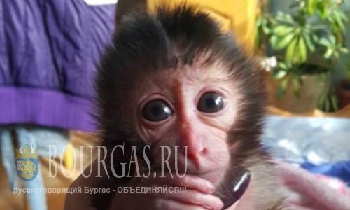 В зоопарке Софии выкормили младенца обезьяны