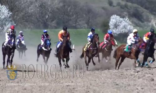 Фестиваль конного спорта пройдет в Тенево