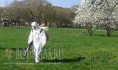 борьба с комарами и прочими паразитами в Бургасе