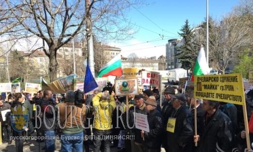 Пчеловоды Болгарии протестуют