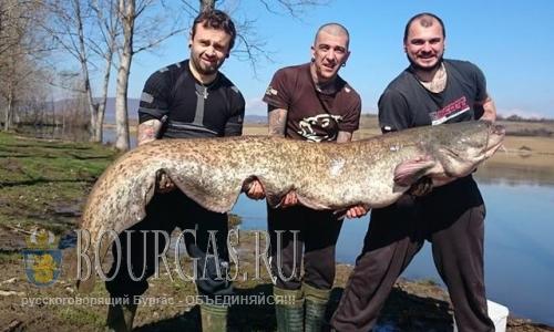 Сома гиганта поймали в Болгарии рыбаки любители