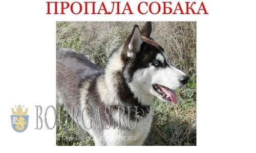В Болгарии, как и в Европе, воруют животных