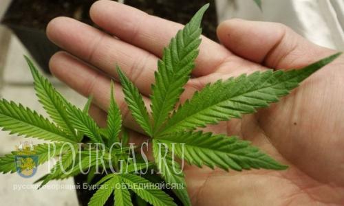 В Болгарии узаконят марихуану