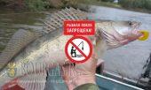 В Болгарии введен запрет на вылов судака