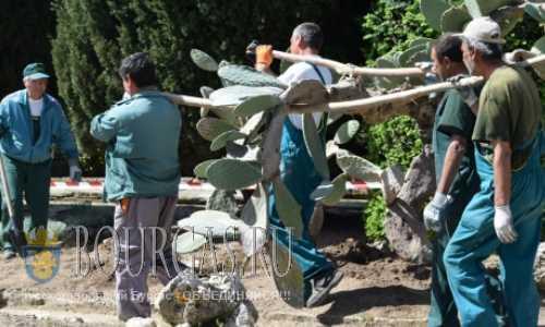 Кактусы в Балчике раньше обычного вышли на работу