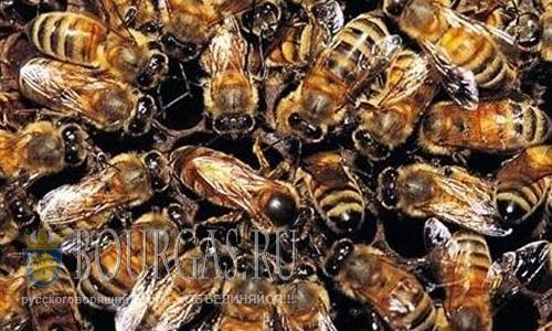 Массовая гибель пчел в Болгарии
