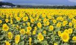 Продолжительность лета в Болгарии увеличивается