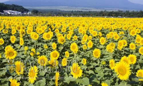Продолжительно лета в Болгарии увеличивается