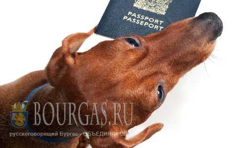 В Болгарии начали проверки собачьих паспортов