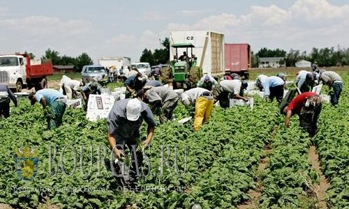 Фермеры в Болгарии не могут найти работников