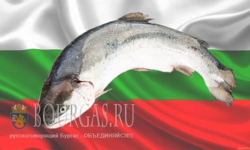 Болгарская сёмга скоро появится на прилавках