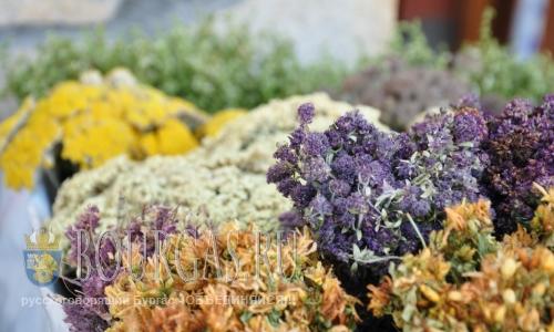 Болгарские лечебные травы лучшие в Европе