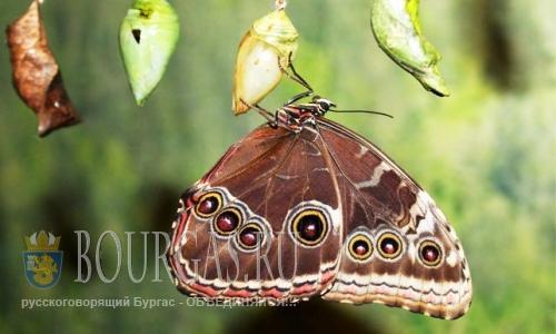 Экзотические виды бабочек поселятся во Флора-Бургас