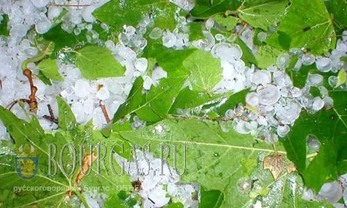 Град продолжает уничтожать урожай в садах Болгарии
