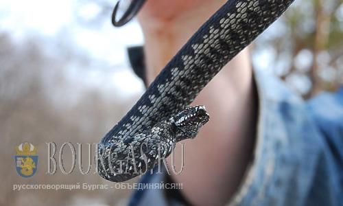 Ядовитые змеи атакуют туристов в Болгарии