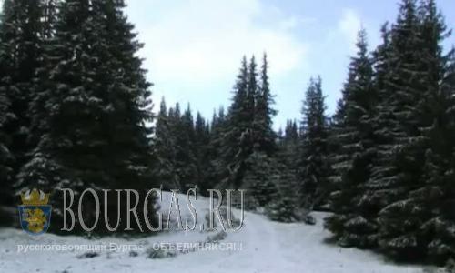 Снег выпал в мае на болгарском курорте Пампорово