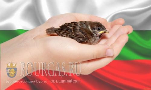 В Болгарии исчезают птицы