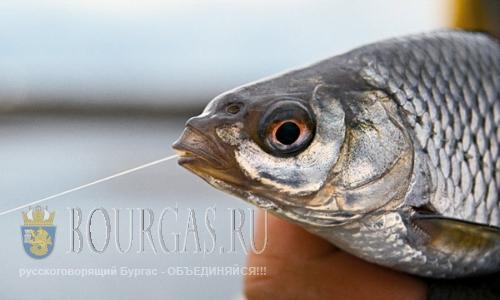 В Болгарии снова можно ловить рыбу