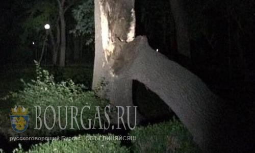 В Бургасе в Морском парке рухнуло 40-летнее дерево