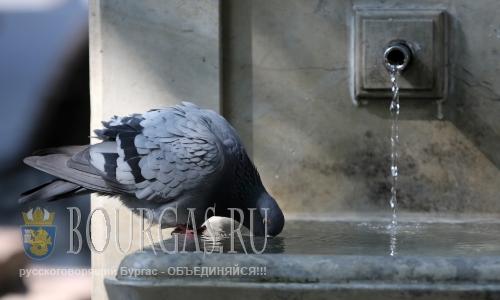 31 июля 2016 года, Болгария, София, И голубям тяжело переносить жару
