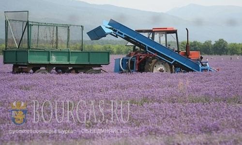 Американцы инвестируют в болгарское лавандовое масло