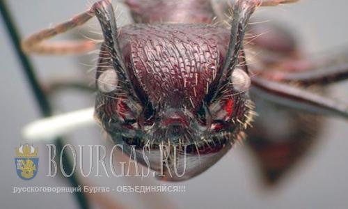 Ядовитые насекомые атакуют южные рубежи Болгарии