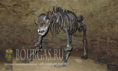 На территории Болгарии когда-то жили пещерные медведи