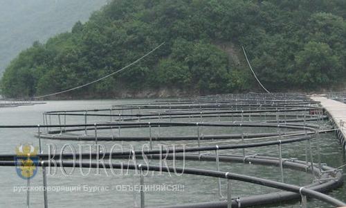 Рыболовные хозяйства в Болгарии модернизируют