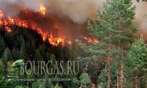 В Болгарии пожар уничтожил 2000 гектаров леса
