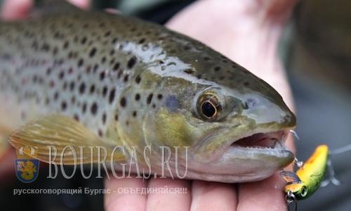 В Кюстендиле, в реке Банщица - горожане ловят форель