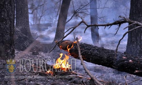 23 августа 2016 года, муниципалитет Харманли, Южная Болгария - пожары в районе сел Иваново, Надежден и Лешниково