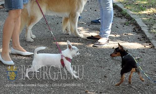 28 августа 2016 года, Видин, крепость Баба Вида - выставка собак на Кубок Видина